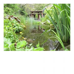 Tuin gereedschap & insecten bestrijding